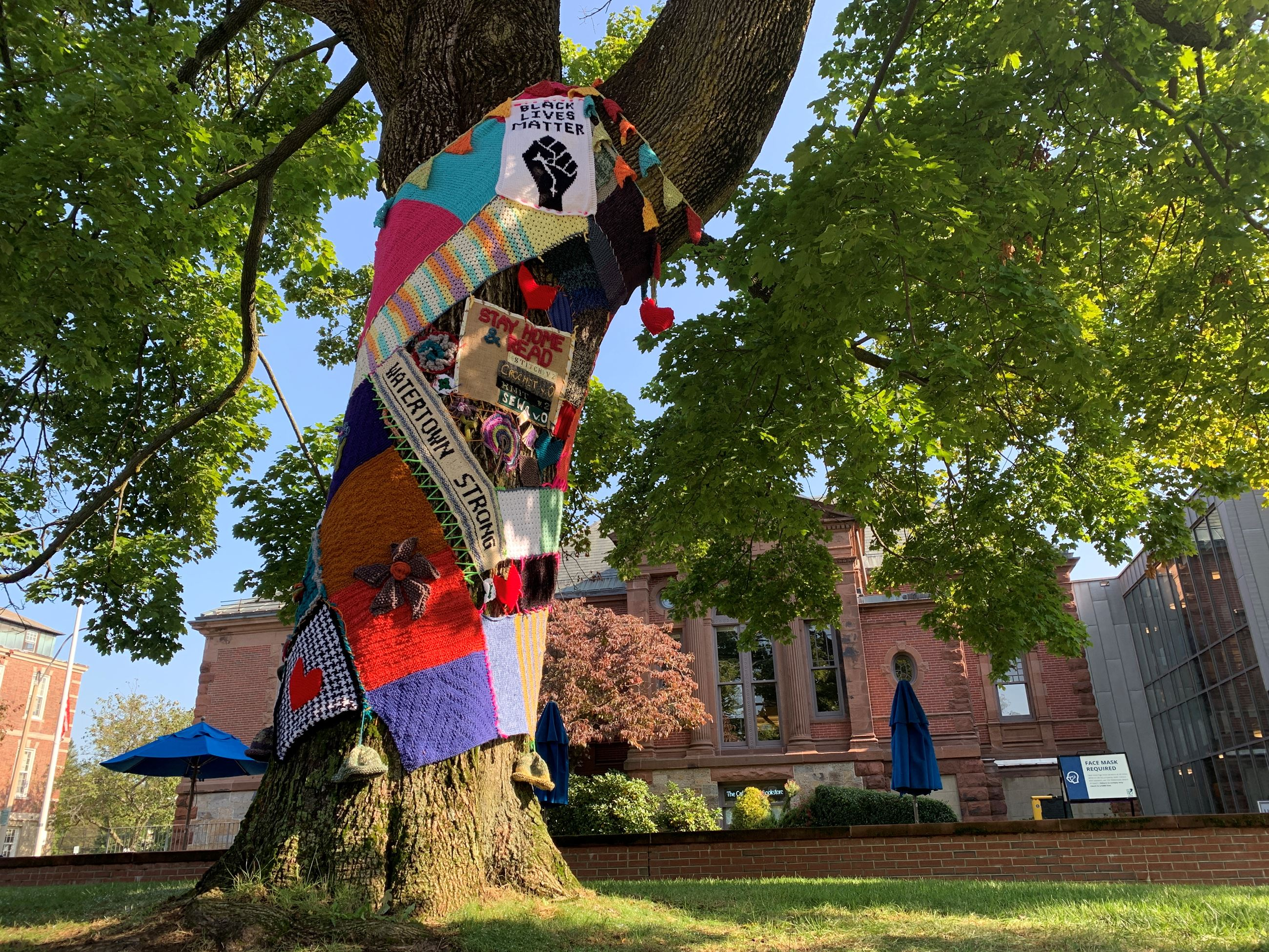 Photo of a large deciduous tree with colorful knit yarn covering the trunk.